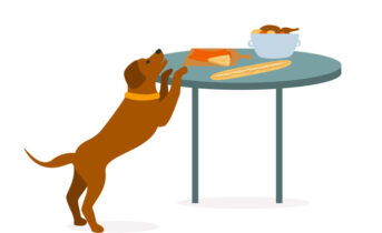 Dog Counter Surfing